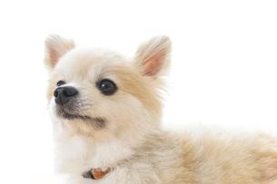 リラックスする犬の写真素材 [FYI04724427]