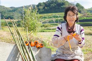 野菜を収穫するシニアの写真素材 [FYI04724674]