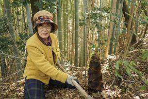 タケノコ刈りをする高齢の女性の写真素材 [FYI04724695]