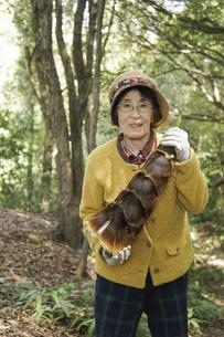 タケノコ刈りをする高齢の女性の写真素材 [FYI04724696]