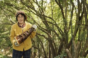 タケノコ刈りをする高齢の女性の写真素材 [FYI04724697]