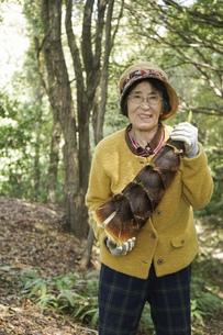 タケノコ刈りをする高齢の女性の写真素材 [FYI04724699]