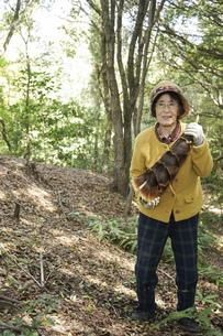 タケノコ刈りをする高齢の女性の写真素材 [FYI04724700]