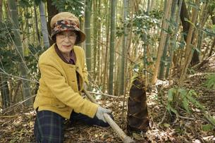 タケノコ刈りをする高齢の女性の写真素材 [FYI04724701]