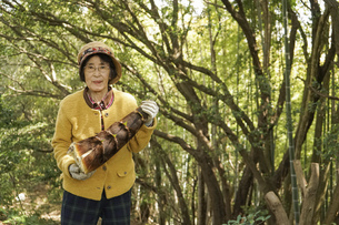 タケノコ刈りをする高齢の女性の写真素材 [FYI04724706]
