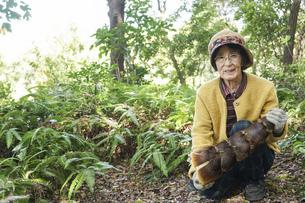 タケノコ刈りをする高齢の女性の写真素材 [FYI04724707]