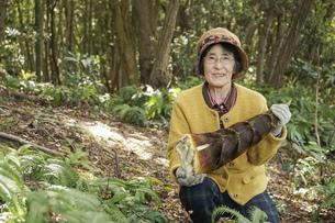 タケノコ刈りをする高齢の女性の写真素材 [FYI04724708]