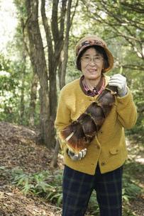 タケノコ刈りをする高齢の女性の写真素材 [FYI04724709]