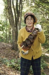 タケノコ刈りをする高齢の女性の写真素材 [FYI04724710]