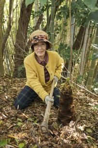 タケノコ刈りをする高齢の女性の写真素材 [FYI04724713]