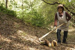 タケノコ刈りをする高齢の女性の写真素材 [FYI04724716]