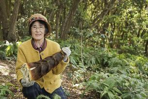 タケノコ刈りをする高齢の女性の写真素材 [FYI04724718]