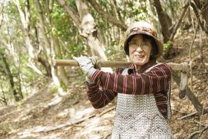 タケノコ刈りをする高齢の女性の写真素材 [FYI04724719]