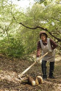 タケノコ刈りをする高齢の女性の写真素材 [FYI04724721]