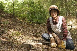 タケノコ刈りをする高齢の女性の写真素材 [FYI04724723]