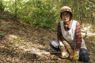 タケノコ刈りをする高齢の女性の写真素材 [FYI04724724]