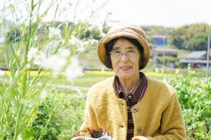 野菜を収穫するシニアの写真素材 [FYI04724793]