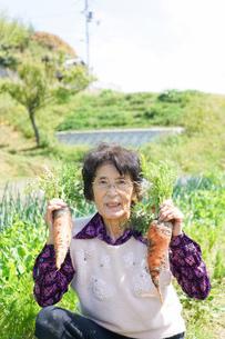 野菜を収穫するシニアの写真素材 [FYI04724910]