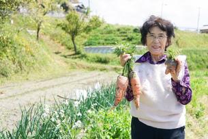 野菜を収穫するシニアの写真素材 [FYI04724915]