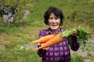 野菜を収穫するシニアの写真素材 [FYI04724917]