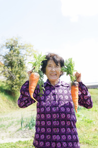 野菜を収穫するシニアの写真素材 [FYI04724919]