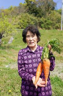 野菜を収穫するシニアの写真素材 [FYI04724928]
