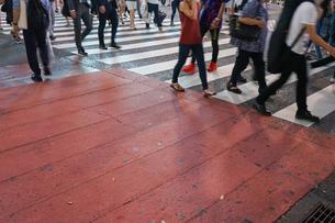 横断歩道の写真素材 [FYI04725268]
