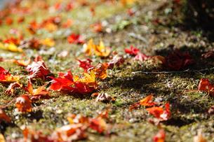 落ち葉の写真素材 [FYI04728025]
