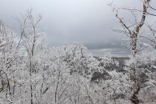 護摩壇山の樹氷の写真素材 [FYI04728028]