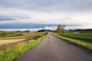 朝の田園風景と農道の写真素材 [FYI04728293]