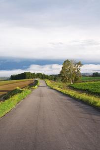 朝の田園風景と農道の写真素材 [FYI04728294]
