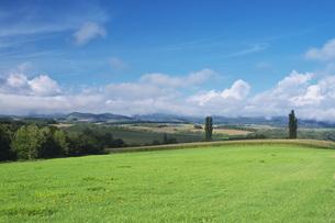 2本のポプラの木と田園風景と雲の写真素材 [FYI04728300]