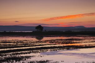 能取湖とサンゴ草の朝の写真素材 [FYI04728329]