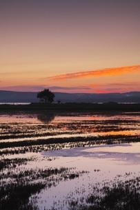 能取湖とサンゴ草の朝の写真素材 [FYI04728330]