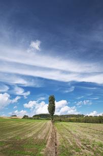 ポプラの木と雲の写真素材 [FYI04728369]