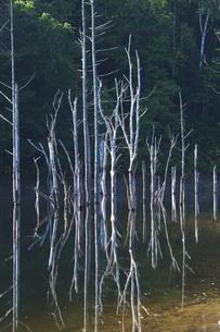 落合ダムと枯れ木の写真素材 [FYI04728400]