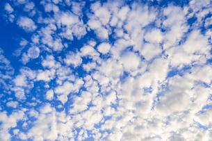 【秋】青空とうろこ雲 背景素材の写真素材 [FYI04728464]