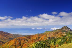 横手山のぞき付近から望む紅葉の樹林と笠岳と北アルプス遠望の写真素材 [FYI04728572]