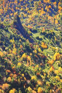 横手山のぞき付近から望む紅葉の樹林と1816峰の写真素材 [FYI04728590]