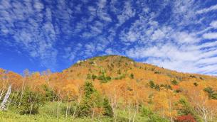 笠岳避難小屋から望む紅葉の笠岳とうろこ雲の写真素材 [FYI04728594]
