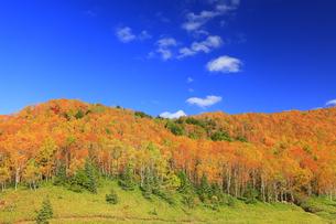 平床大噴泉付近から望む東方向の紅葉の樹林と雲の写真素材 [FYI04728596]