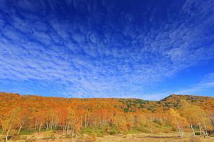平床大噴泉付近から望む南東方向の紅葉の樹林とうろこ雲の写真素材 [FYI04728598]