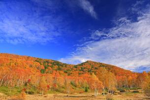 平床大噴泉付近から望む南東方向の紅葉の樹林とすじ雲の写真素材 [FYI04728599]