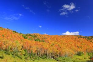 平床大噴泉付近から望む南東方向の紅葉の樹林と雲の写真素材 [FYI04728600]