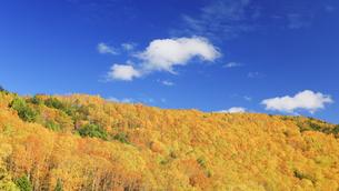 平床大噴泉付近から望む南東方向の紅葉の樹林とわた雲の写真素材 [FYI04728601]