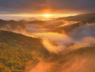 武石峠の県道62号464号分岐付近から望む紅葉の樹林と雲海と朝日の写真素材 [FYI04728605]