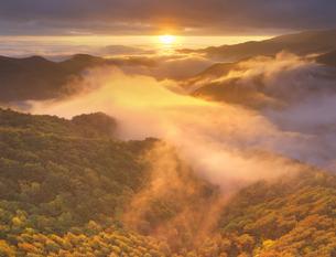 武石峠の県道62号464号分岐付近から望む紅葉の樹林と雲海と朝日の写真素材 [FYI04728608]