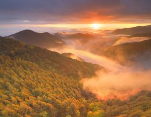 武石峠付近から望む紅葉の樹林と雲海と朝日と渋田見山の写真素材 [FYI04728610]