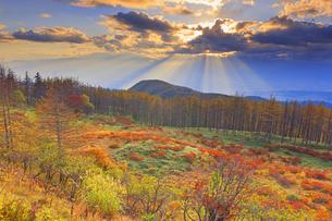 思い出の丘付近から望む紅葉の樹林と松本平と夕日の光芒の写真素材 [FYI04728611]