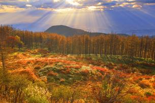 思い出の丘付近から望む紅葉の樹林と松本平と夕日の光芒の写真素材 [FYI04728612]